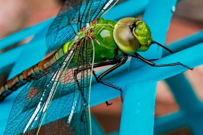 Strekoza Dragonfly 5184  3456 700x466 Стрекоза   Dragonfly