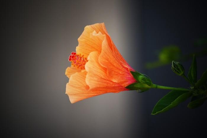 TSvetok Flower 6016  4016 700x466 Цветок   Flower