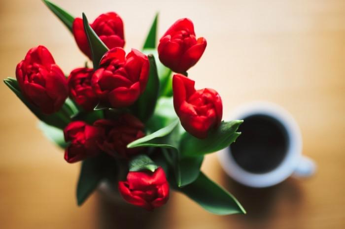 Krasnyie tyulpanyi Red tulips 5903 x 3935 700x465 Красные тюльпаны   Red tulips
