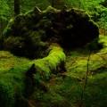 Лес, мох - Wood, moss