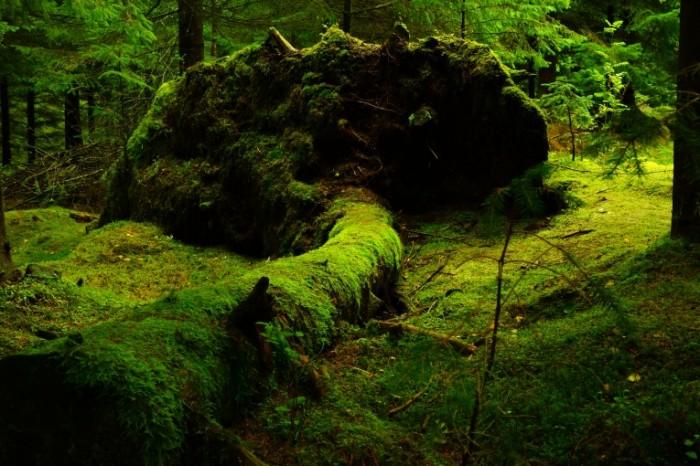 Les moh Wood moss 6000  4000 700x466 Лес, мох   Wood, moss