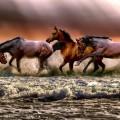 Лошади, табун, берег - Horses, herd, shore