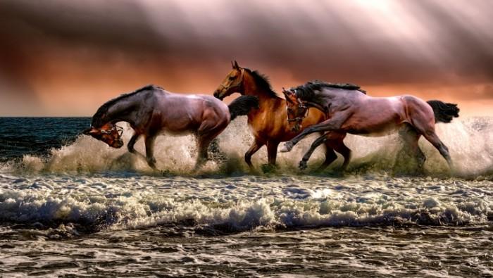 Loshadi tabun bereg Horses herd shore 5000  2830 700x395 Лошади, табун, берег   Horses, herd, shore