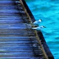 Пирс, птицы - Pier, birds