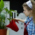 Поливает цветок, цветочный магазин - Flowers the flower, flower shop
