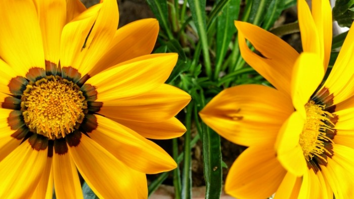 Желтый цветок   Yellow flower