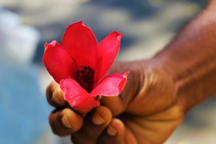 E`kzoticheskiy tsvetok v ruke makro Exotic flower in hand macro 6000  4000 700x466 Экзотический цветок в руке, макро   Exotic flower in hand, macro