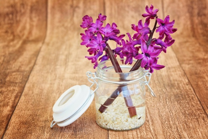 Giatsint tsvetyi v vode Hyacinth flowers in water 5922  3948 700x466 Гиацинт, цветы в воде   Hyacinth, flowers in water