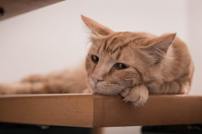 Grustnyiy kot makro Sad cat macro 6000  4000 700x466 Грустный кот, макро   Sad cat, macro