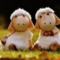 Игрушки, овечки - Toys, Lambs