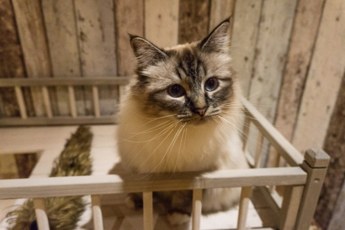 Koshka koshachiy domik Cat cat house 6000  4000 700x466 Кошка, кошачий домик   Cat, cat house