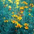 Луговые цветы, трава - Meadow flowers, grass