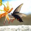 Мотылек, макро, цветок - Moth, macro, flower