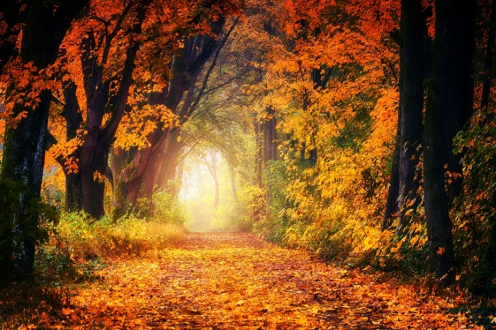 Osen yarkaya listva park Autumn bright foliage park 6000  4000 700x466 Осень, яркая листва, парк   Autumn, bright foliage, park