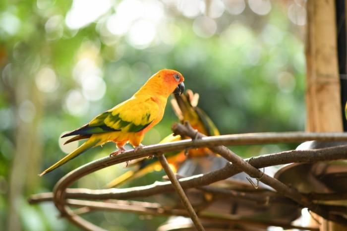 Popugay. ptitsa e`kzotika Parrot. bird exotic 8256  5504 700x466 Попугай. птица, экзотика   Parrot. bird, exotic