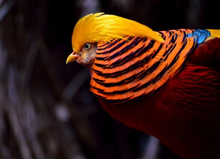 YArkaya ptitsa Bright Bird 5295  3841 700x506 Яркая птица   Bright Bird