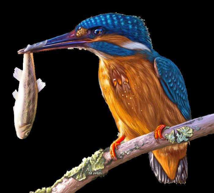 ZHivopis zimorodok makro Painting kingfisher macro 5265  4754 700x631 Живопись, зимородок, макро   Painting, kingfisher, macro