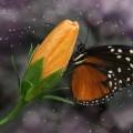 Бабочка, цветок, макро - Butterfly, flower, macro