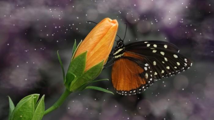 Babochka tsvetok makro Butterfly flower macro 6000  3374 700x393 Бабочка, цветок, макро   Butterfly, flower, macro