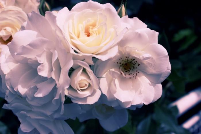 Belyie tsvetyi makro kust White flowers macro bush 5184  3456 700x466 Белые цветы, макро, куст   White flowers, macro, bush