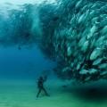 Дайвинг, рыбы, подводная съемка - Diving, fish, underwater shooting