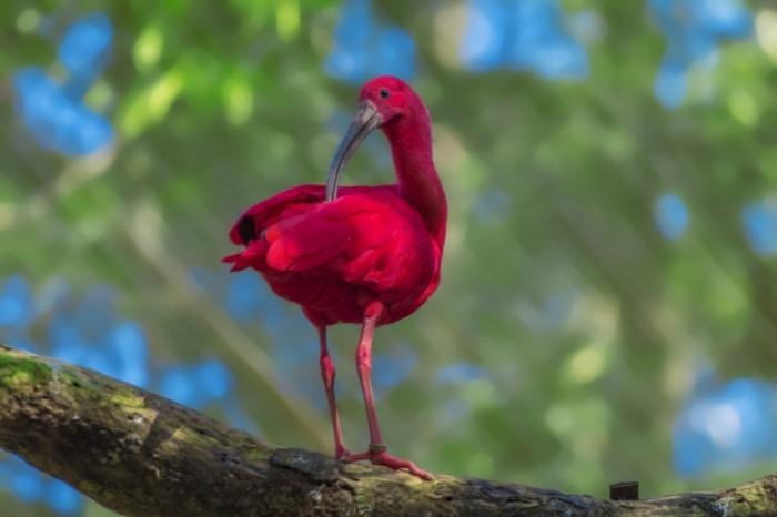 E`kzoticheskaya ptitsa tropiki makro Exotic bird tropics macro 5184  3456 700x466 Экзотическая птица, тропики, макро   Exotic bird, tropics, macro
