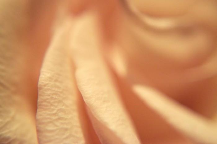 Fon rozovaya roza makro Background pink rose macro 6000  4000 700x466 Фон, розовая роза, макро   Background, pink rose, macro