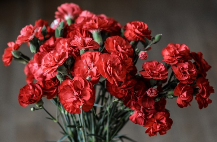 Gvozdika makro hdr Carnations macro hdr 5488  3600 700x458 Гвоздика, макро, hdr   Carnations, macro, hdr