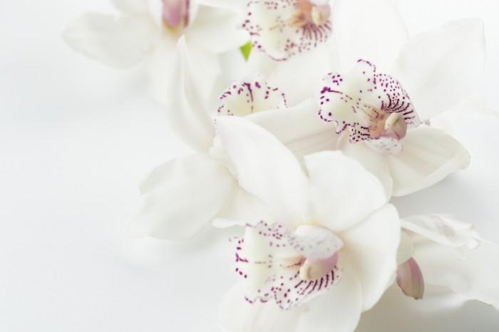 Orhideya belosnezhnyie tsvetyi Orchid white flowers 6016  4016 700x466 Орхидея, белоснежные цветы   Orchid, white flowers