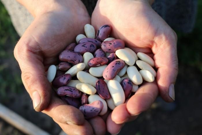 TSvetnaya fasol makro Colored beans macro 6000  4000 700x466 Цветная фасоль, макро   Colored beans, macro