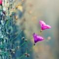 Цветы, сетка рабица, макро - Flowers, mesh netting, macro