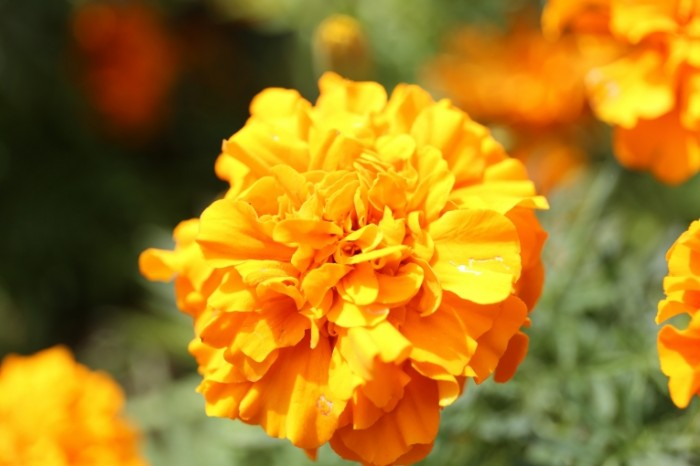YArkiy tsvetok makro zheltyiy Bright flower macro yellow 5472  3648 700x466 Яркий цветок, макро, желтый   Bright flower, macro, yellow