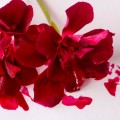 Красный цветок, чернила, яркий красный - Red flower, ink, bright red
