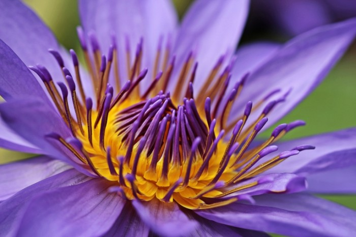 Liliya e`kzoticheskiy tsvetok makro Lily exotic flower macro 5184  3456 700x466 Лилия, экзотический цветок, макро   Lily, exotic flower, macro