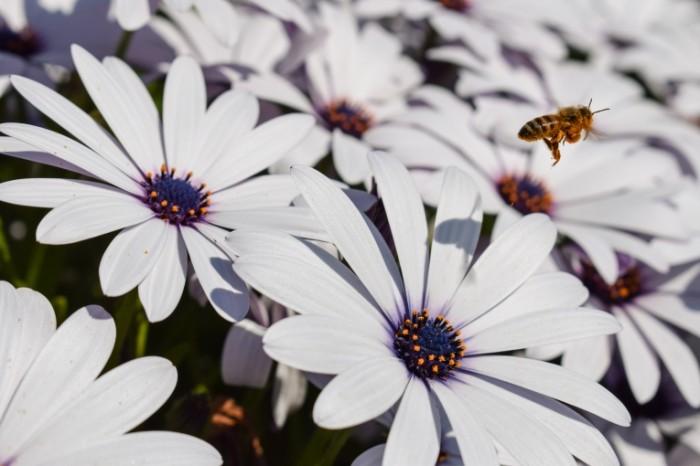 Osa lug tsvetyi makro Wasp meadow flowers macro 6000  4000 700x466 Оса, луг, цветы, макро   Wasp, meadow, flowers, macro