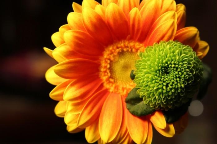 TSvetok boke makro buton redkie sotsvetie Flower bokeh macro bud sparse inflorescence 5184  3456 700x466 Цветок, боке, макро, бутон, редкие соцветие   Flower, bokeh, macro, bud, sparse inflorescence