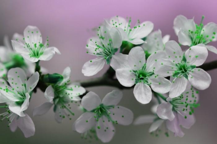 Zelenyie tsvetki Blum makro Green flowers Bloom macro 5184  3456 700x466 Зеленые цветки, Блум, макро   Green flowers, Bloom, macro