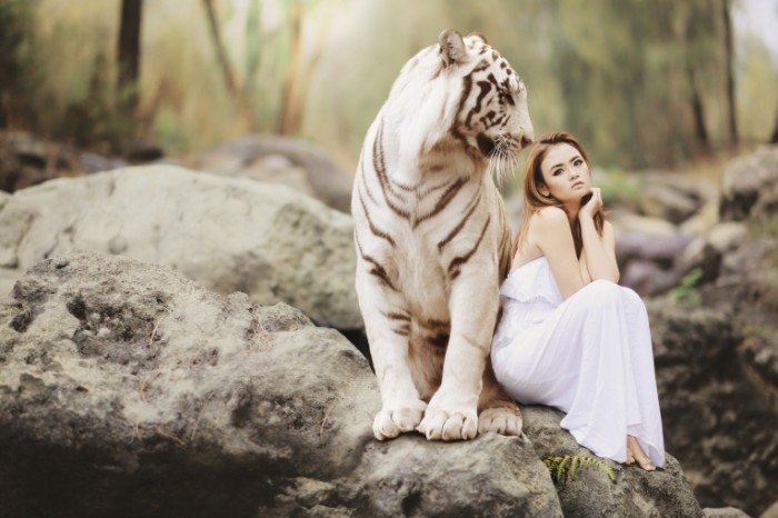 Belyiy tigr yaponka devushka s tigrom White tiger Japanese girl with a tiger 5472  3648 700x466 Белый тигр, японка, девушка с тигром   White tiger, Japanese, girl with a tiger