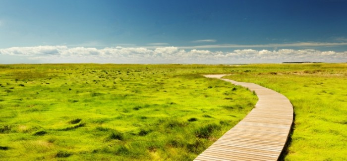 Derevyannaya dorozhka pole trava Wooden path field grass 7895  3675 700x325 Деревянная дорожка, поле, трава   Wooden path, field, grass