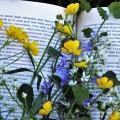 Книга, полевые цветы, отдых на природе - Book, wild flowers, outdoor recreation