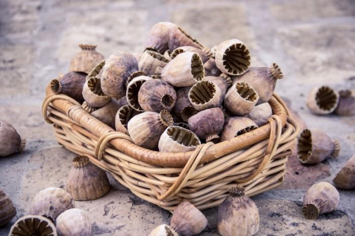 Mak semena makovyie korobochki Poppy seeds poppy boxes 5184  3456 700x466 Мак, семена, маковые коробочки   Poppy, seeds, poppy boxes