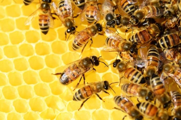 Пчелы, осы, мед, улей, соты — Bees, wasps, honey, hive, honeycomb