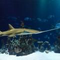 Рыба меч, акула, морской аквариум, океанариум - Fish sword, shark, marine aquarium, aquarium