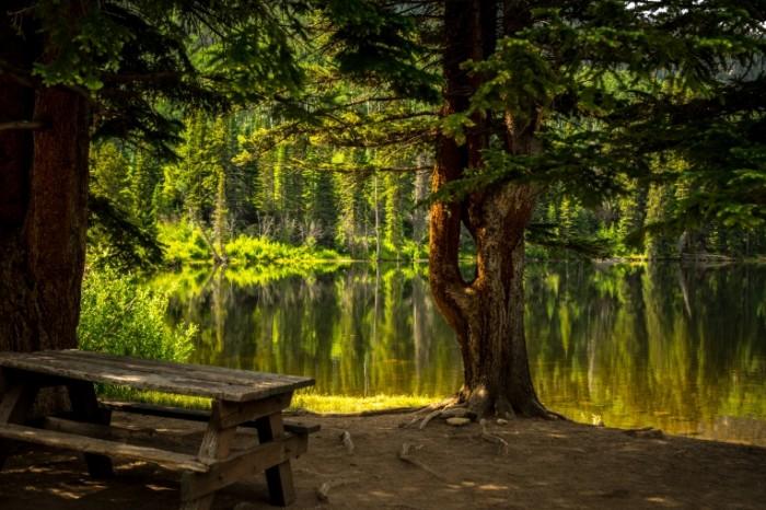 Skameyka v parke lesnoe ozero bench in the park a forest lake 6016  4016 700x466 Скамейка в парке, лесное озеро   bench in the park, a forest lake