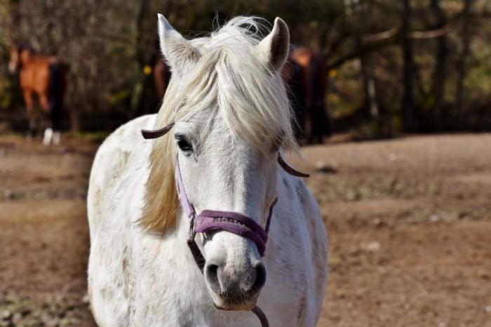 Loshad krupnyim planom konkur Horse close up contest 6000  4000 700x466 Лошадь крупным планом, конкур   Horse close up, contest