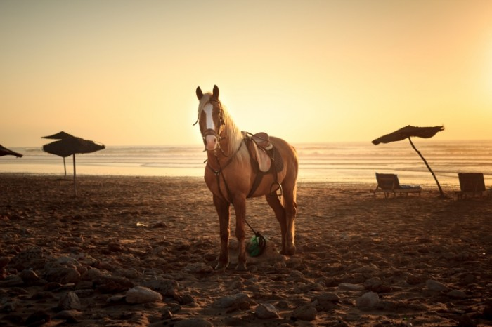Loshad na plyazhe zakat Horse on the beach sunset 5178h3452 700x466 Лошадь на пляже, закат   Horse on the beach, sunset