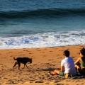 Пара на пляже с собакой - Couple on the beach with a dog