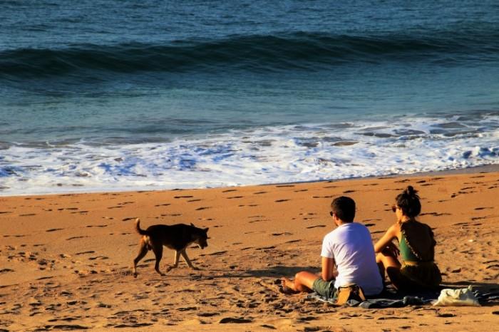 Para na plyazhe s sobakoy Couple on the beach with a dog 6000  4000 700x466 Пара на пляже с собакой   Couple on the beach with a dog