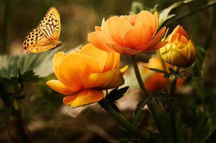 Бабочка, лотос, макро, цветок   Butterfly, lotus, macro, flower