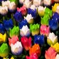 Декоративные цветы, тюльпаны, ландшафтный дизайн - Decorative flowers, tulips, landscape design